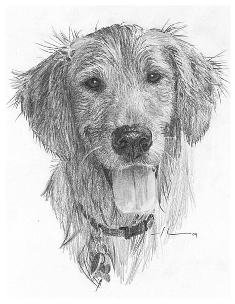 wp-lg wet dog drawing