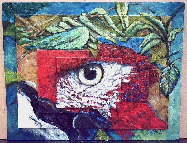 Wild Scarlet Macaw