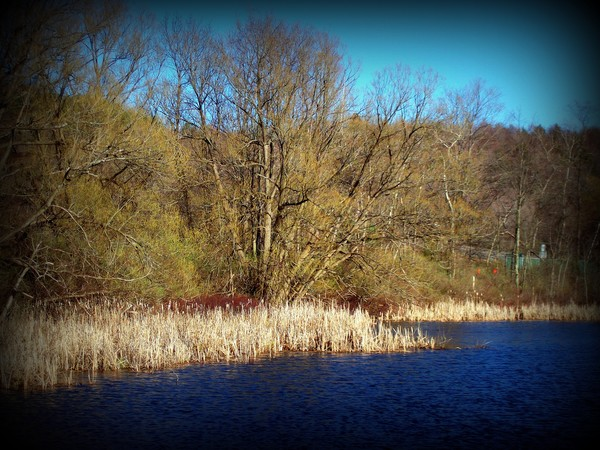 Spring On Leland's Pond 1