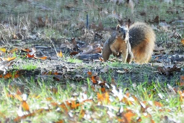 Squirrel Work