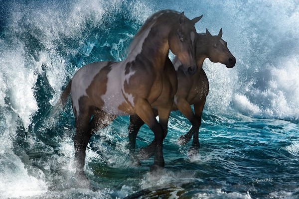 Horse waves