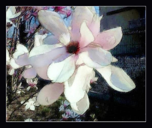 Pretty Magnolia