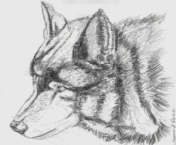 Wolf in Charcoal