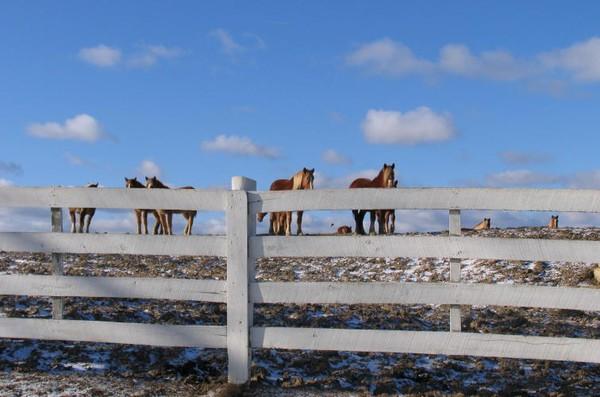 surreal horses