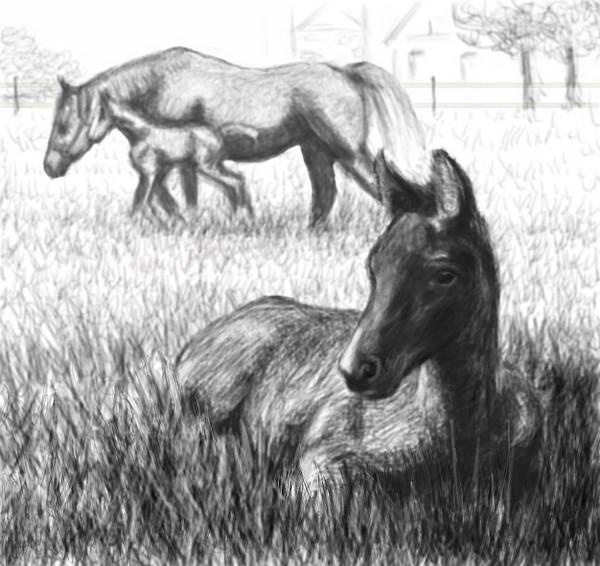 Horsescape