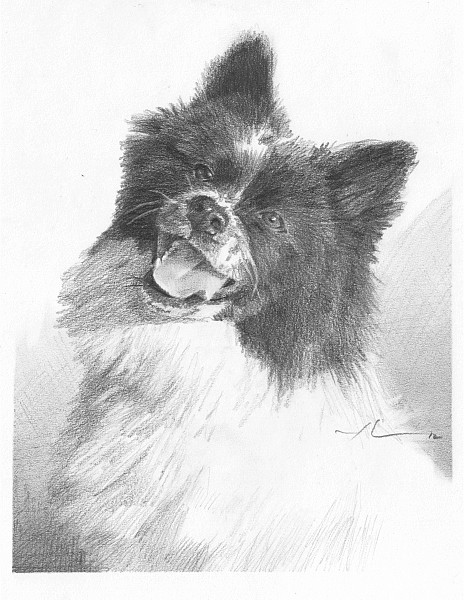smiling dog drawing mike theuer