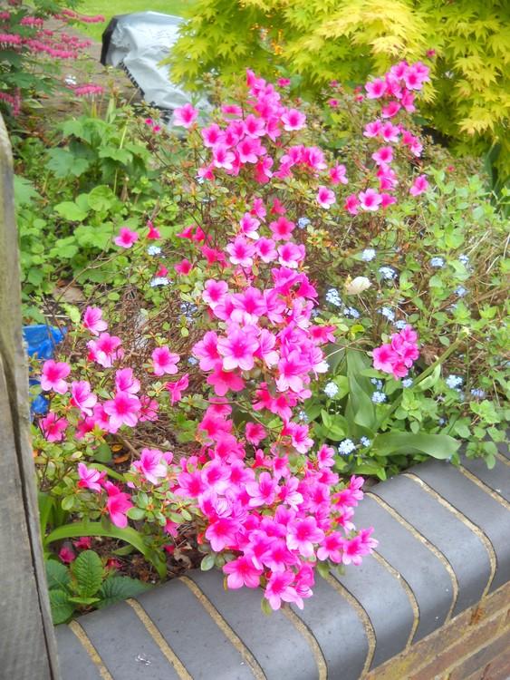 Tiny & tender pink flowers