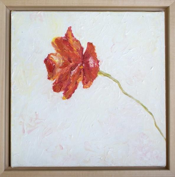 Poppy in reverse frame