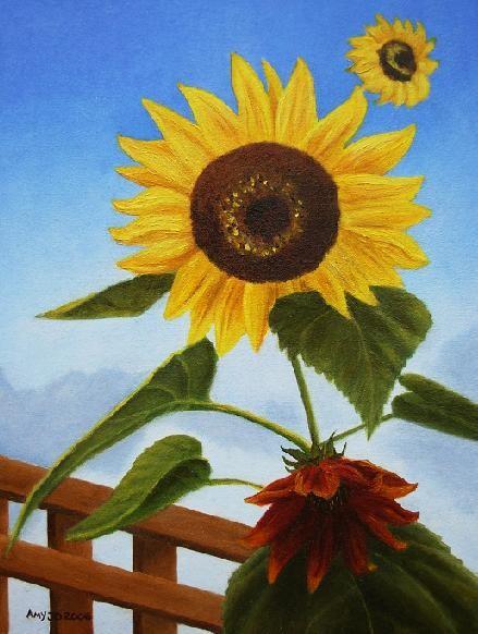 Ali's Sunflowers
