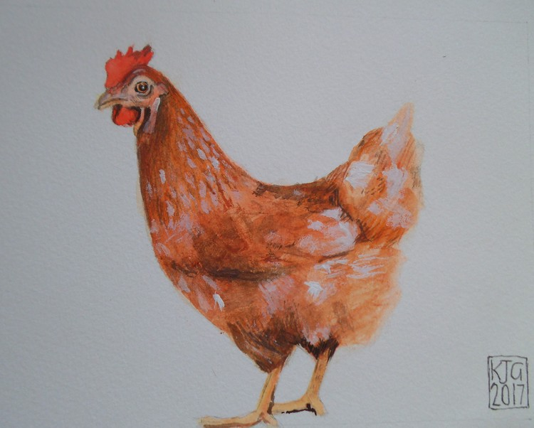 chicken in farmyard