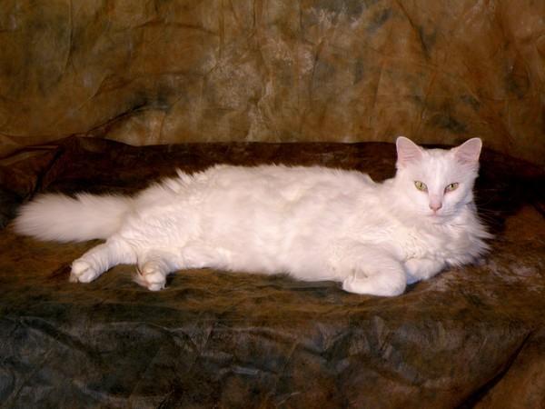 Pet Portraits - Sampling