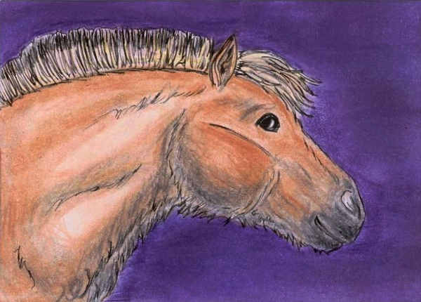 Inga the Prehistoric Horse