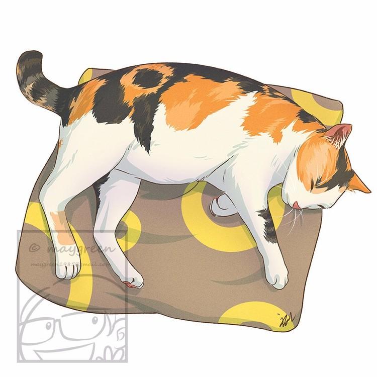 Sleeping Cat Tricolor Calico