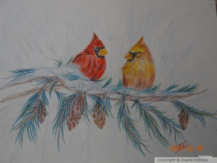 COLORED PENCIL, CARDINALS