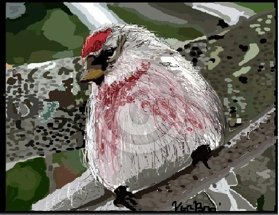 PINK/RED BIRD