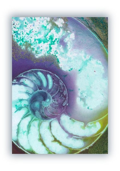 Nautilus Shell 26