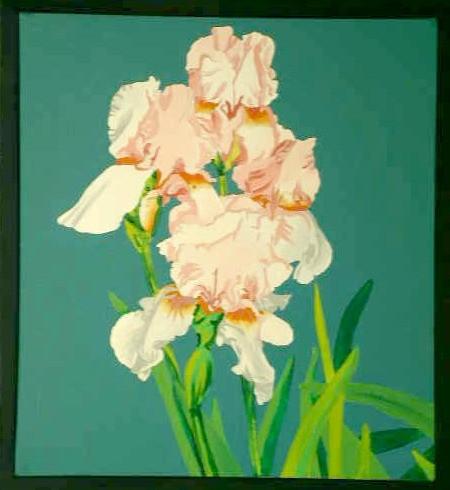 (Peach) Iris