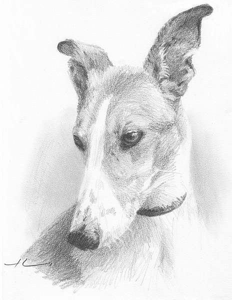 greyhound pencil portrait