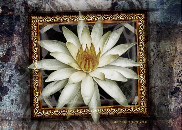 Framed Liliy