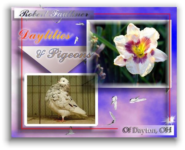 Of Birds & Lilies
