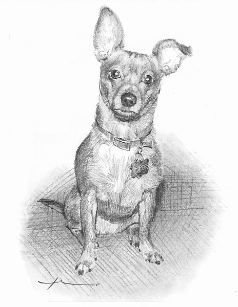 little dog pencil drawing