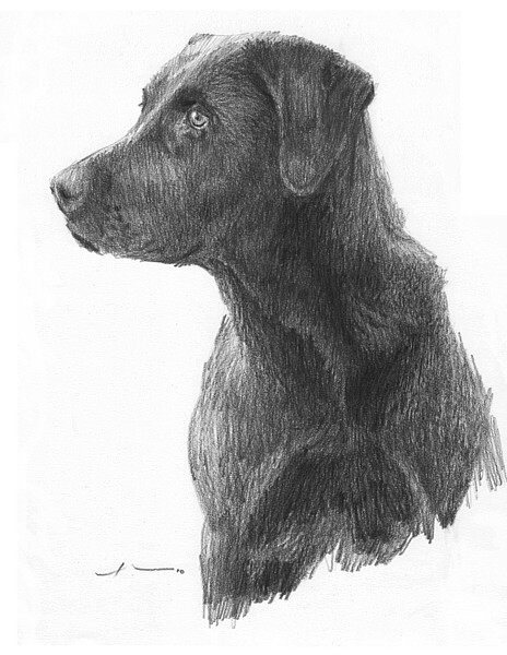wp-lg black lab drawing