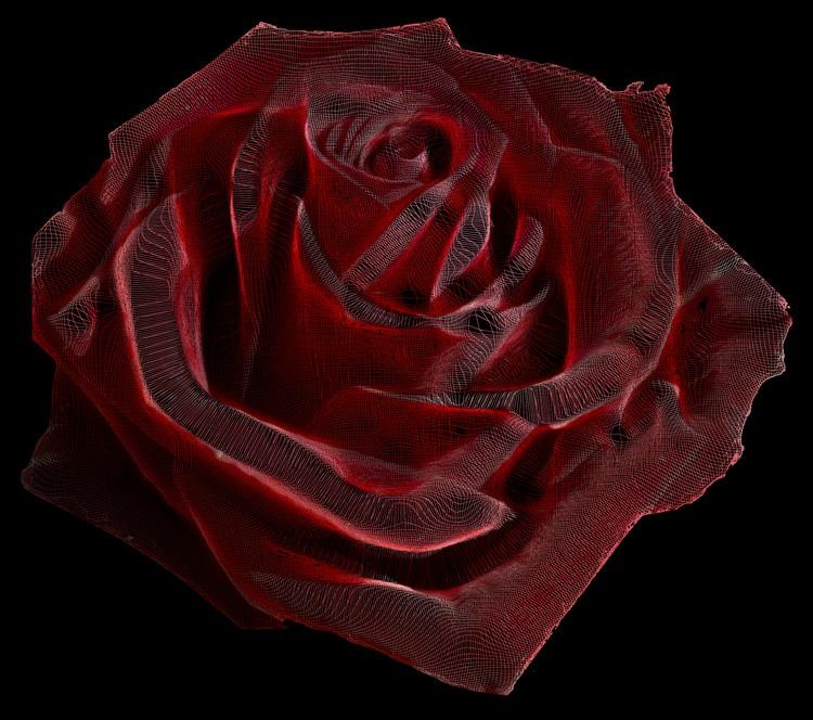Rose Curve Plot