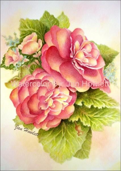 Sue's Glorious Begonia