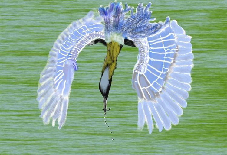 Heron Fishing O857