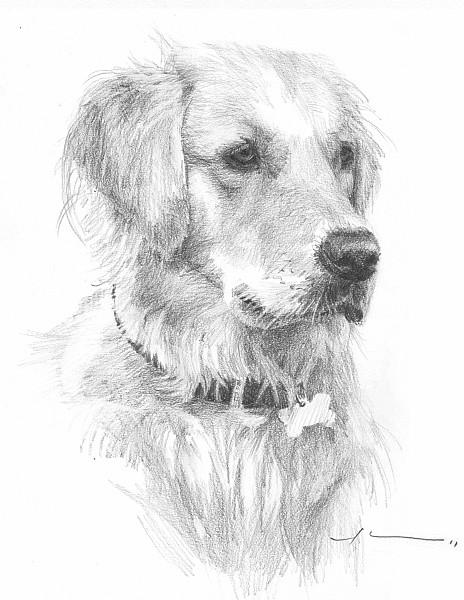 regal dog pencil portrait