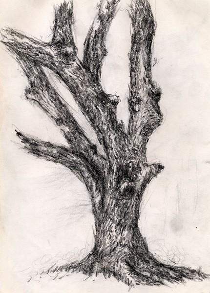 the wailing tree