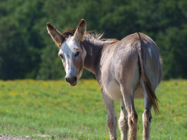 July Donkey