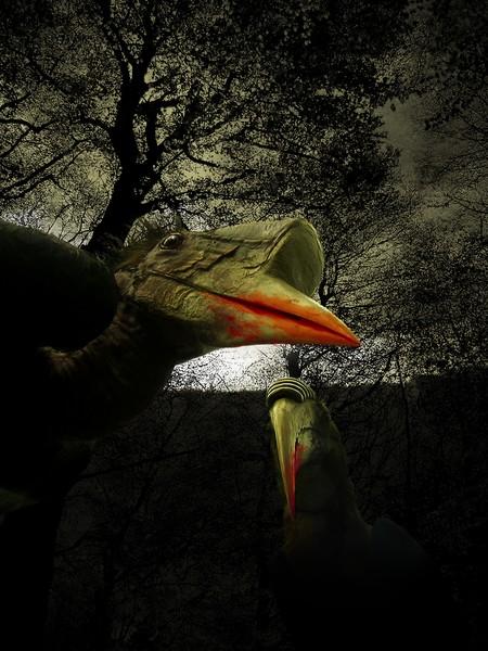 Halloween Birds