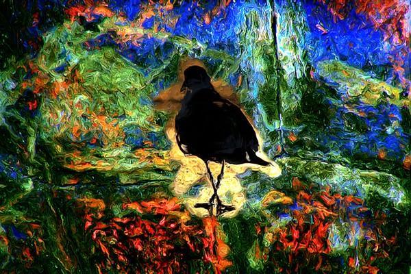 Oil Spill Victim