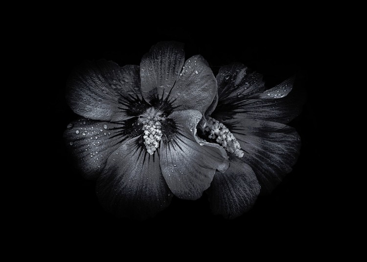 Backyard Flowers In Black And White 35
