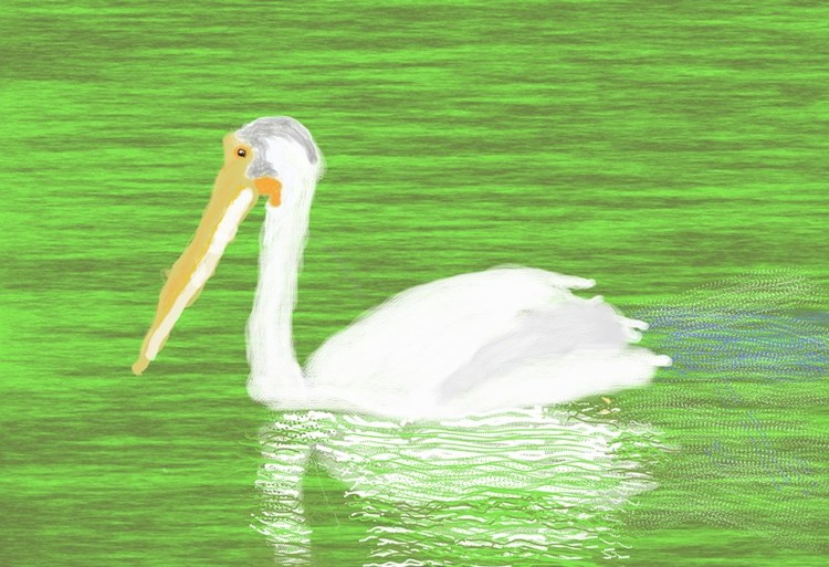 Pelican Reflected  O859