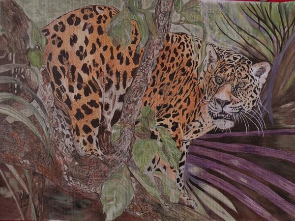 An endangered Jaguar