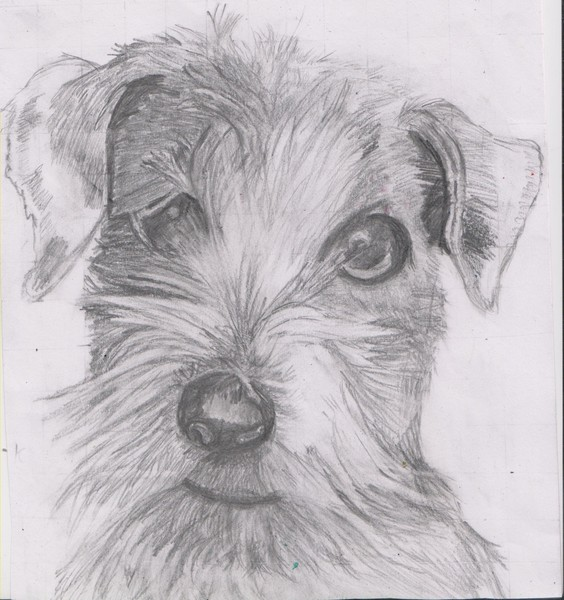 alfie the terrier