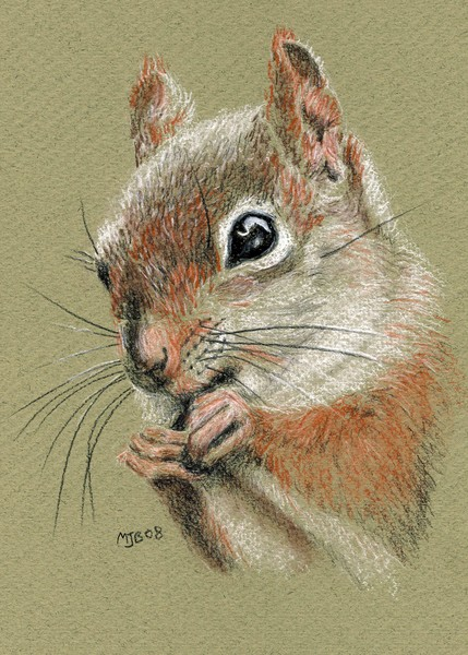 A Little Squirrelly
