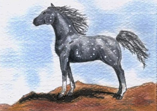 Dapple Gray Arabian ACEO