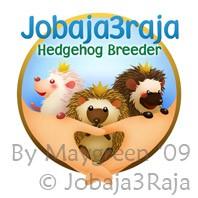 jobaja3raja logo