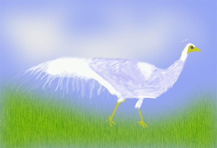 White Peacock O868