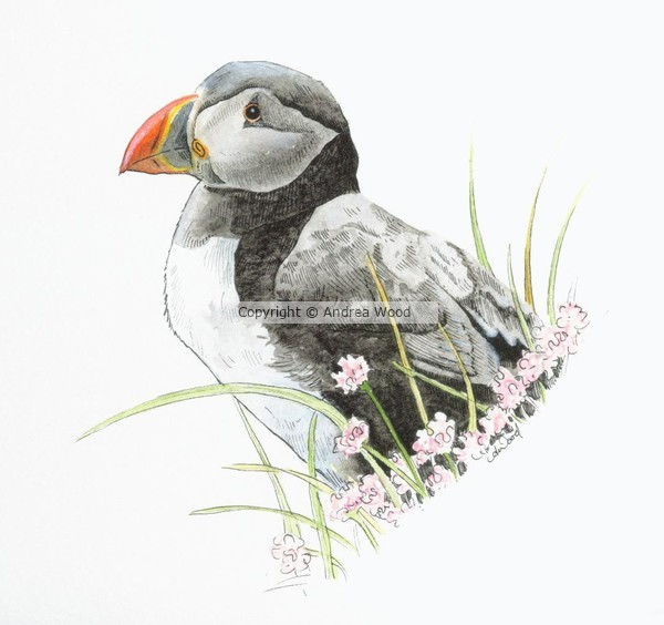 Puffin