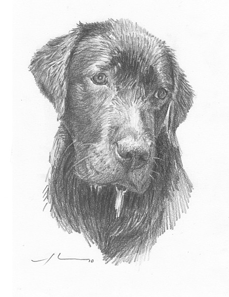 wet dog pencil portrait