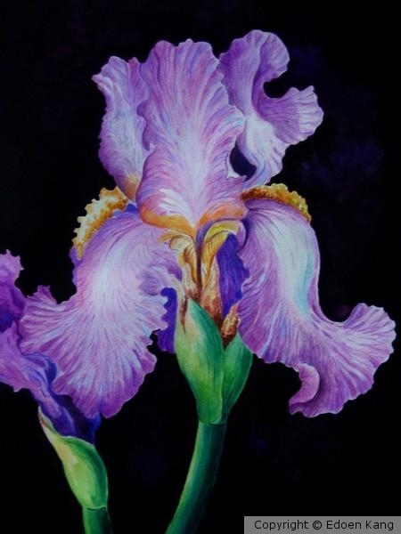 Purple Iris II