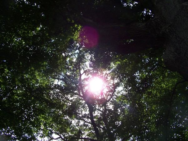 Peaking Sun