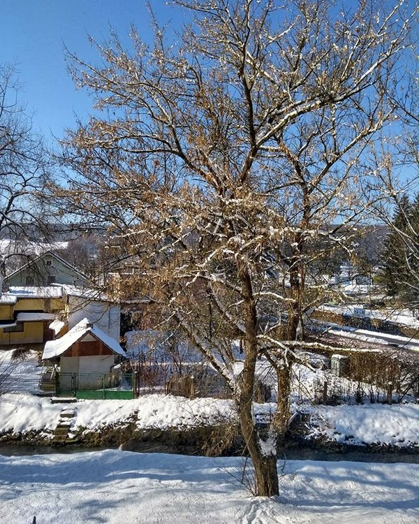 Slovakia tree winter snow wood season cold landscape nature branch frost frozen outdoors park house