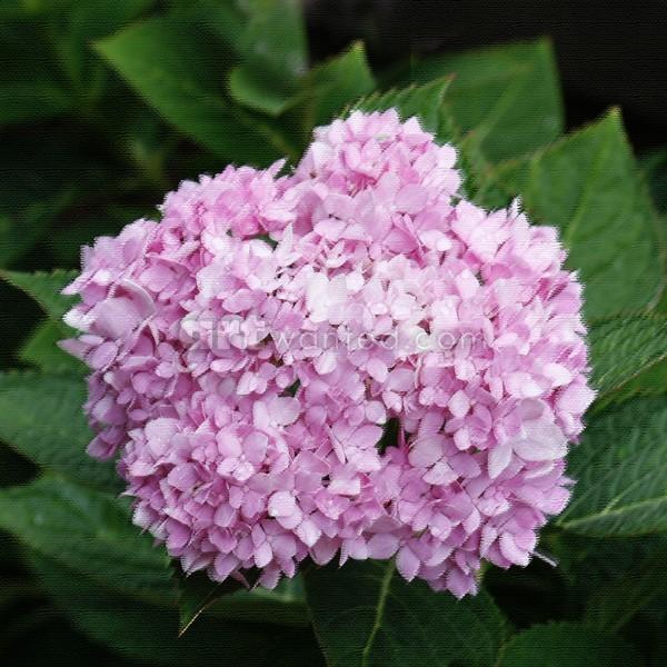 Flower 1, Square format, ne1078