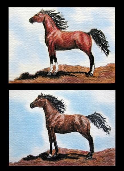 Bay Arabians