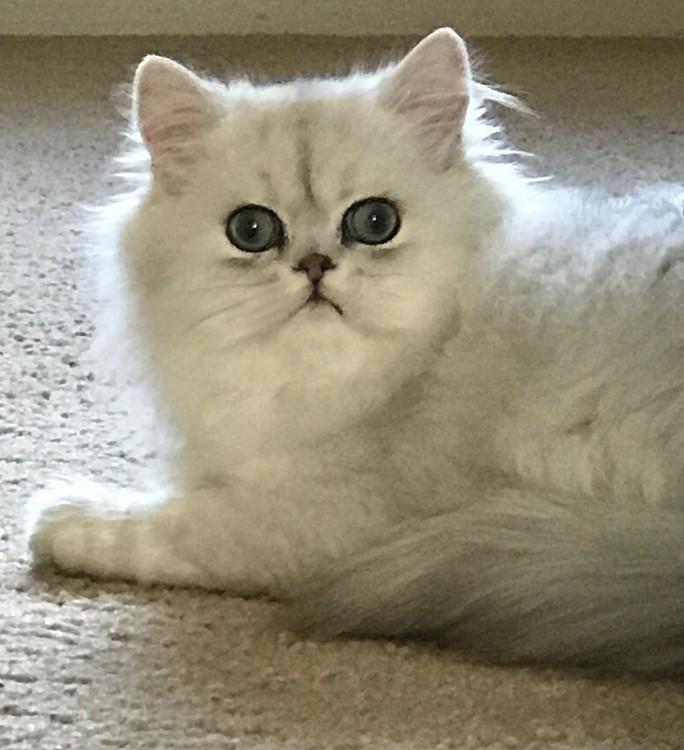 Tippy the Kitten